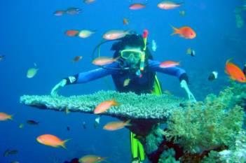 20070823011602-arrecifes-coralinos-en-puerto-rico.jpg